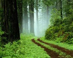 پارک جنگلی گیسوم تونلی جنگلی در شمال ایران