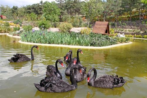 باغ پرندگان-خرید بلیط اتوبوس - خرید اینترنتی بلیط اتوبوس - پایانه - بلیط اتوبوس-