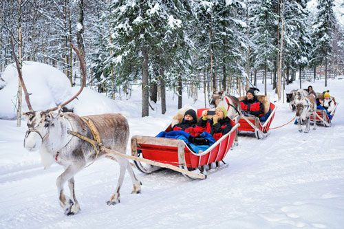 سورتمه گوزن شمالی - لاپلند ، فنلاند
